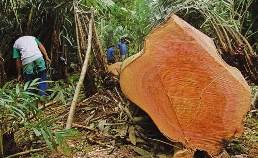Conversaciones de la Federación de Comercio de la Madera sobre la competencia del Cambio Climático