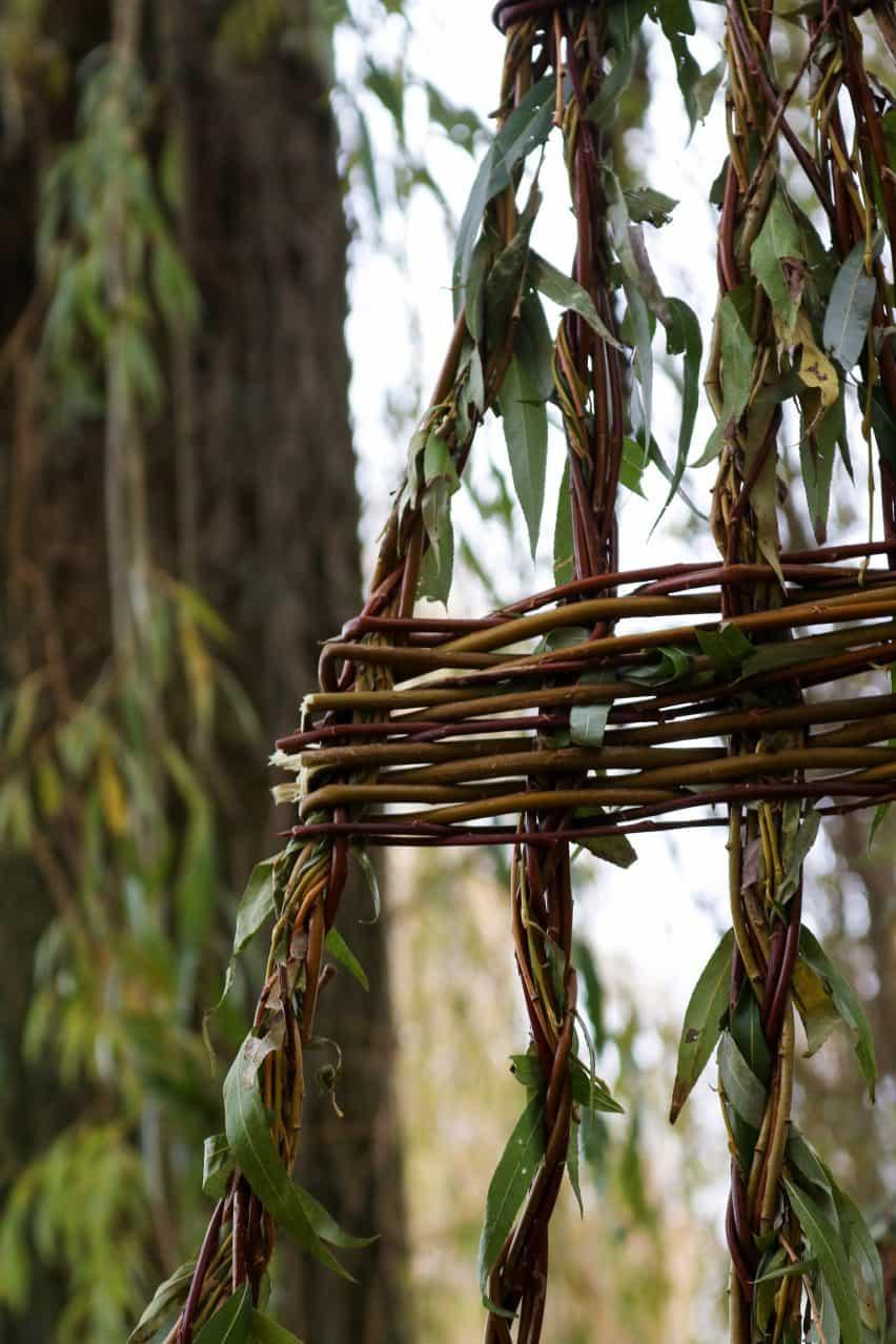 Asiento llorón se forma a partir de ramas vivas y cosechadas