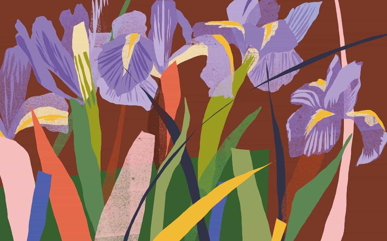 Katy Welsh: Iris (Copyright © Katy Welsh, 2021)