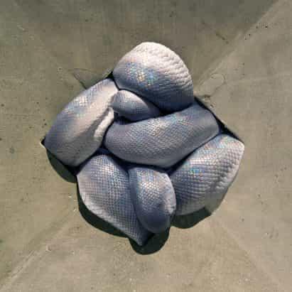 serpientes aplastados incluyen en la exposición de cómo comportarse en la casa de Polly Morgan
