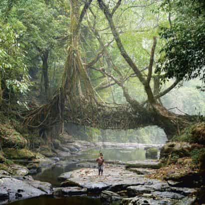 """tecnologías indígenas """"podría cambiar la forma en que diseñamos ciudades"""", dice el ecologista Julia Watson"""