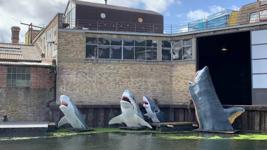 Los tiburones Antepavilion! Jamie Acortar