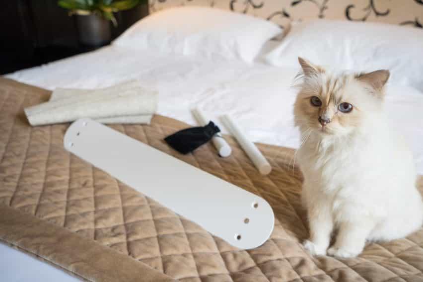 Choupette inspecciona la cama Swing de LucyBalu antes de que se ensambla