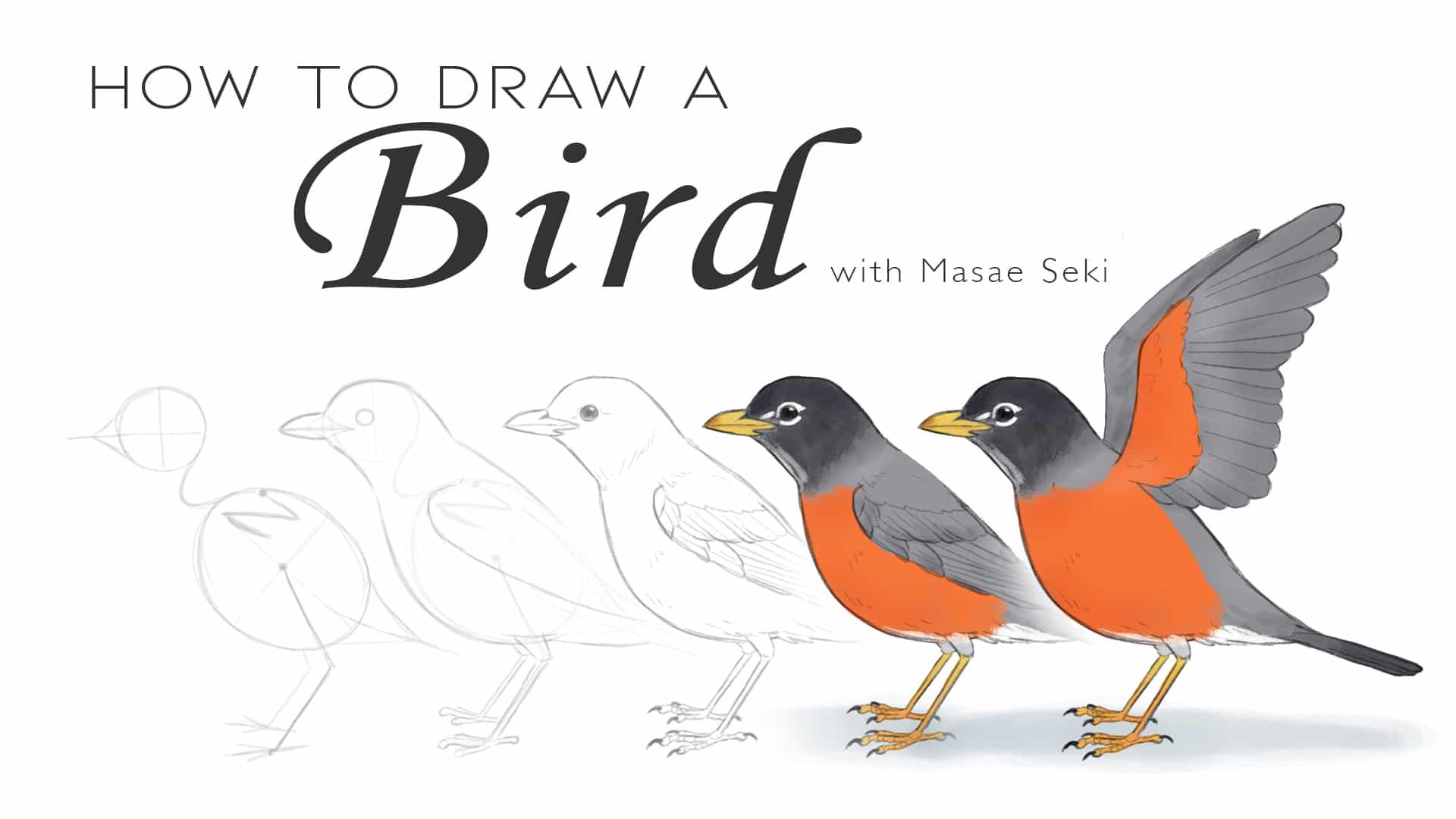 Cómo dibujar un pájaro