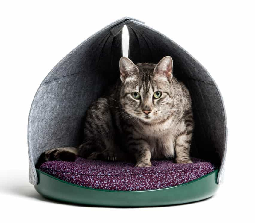 Capa y persona del gato Diseño de mobiliario medios de comunicación social de usar para los felinos