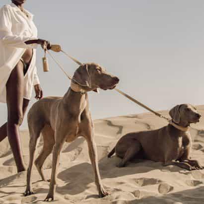 """Pagerie es la """"casa de moda de lujo por primera vez para los animales domésticos"""""""